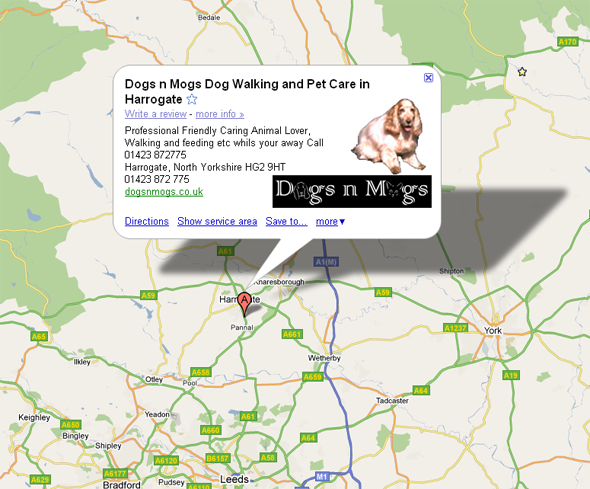 Harrogate dog walking and cat sitting services - Dogs n Mogs